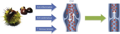 horse chestnut extract effect on venous walls